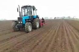 Херсонський фермер посіяв моркву 17 січня