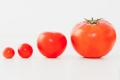 Невідомі ланки еволюції томатів допоможуть створювати стійкі та смачні сорти