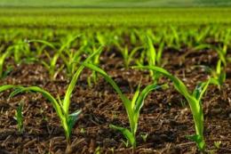 Мікродобрива сприяють кращому засвоєнню фосфору та калію