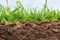 Через деградацію ґрунтів виробники кукурудзи щорічно витрачають більше $0,5 млрд