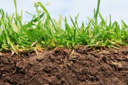 Більшість посівних площ Херсонщини мають недостатнє зволоження ґрунту