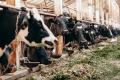 «Єрчики» будують сучасну ферму європейського рівня