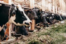 Яка найпоширеніша помилка в годівлі тварин