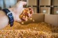 Розміщення в м'яких контейнерах – альтернативний спосіб зберігання зерна на елеваторі