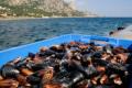 У Криму наростили обсяги аквакультури