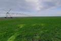 Озимі у Криму зійшли на 95% посівних площ