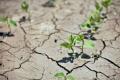 Аграріям Одещини через несприятливі погодні умови довелося перекультивувати понад 16% посівів