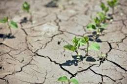 У деяких районах Дніпропетровщини запаси вологи у ґрунті надзвичайно низькі