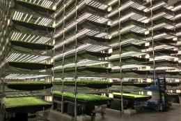 У Швейцарії 2020 року запустять першу роботизовану вертикальну ферму