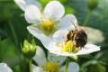 «Медовий клин» України дає змогу виробити приблизно 175 тис. тонн меду, - експерт