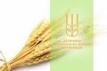 Елеватори ДПЗКУ в першій половині сезону прийняли 1,3 млн. тонн зернових