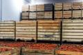 Низька якість та нестача сховищ знижують ціни на моркву, – фермер