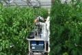Іспанці розробляють робота, який шукатиме шкідників у теплиці