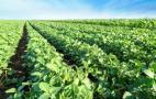 Вчені виявили, що застосування молекулярних нагрівачів дає змогу підвищити врожайність рослин