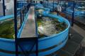 Українські науковці допомагатимуть розвивати аквакультуру в Узбекистані