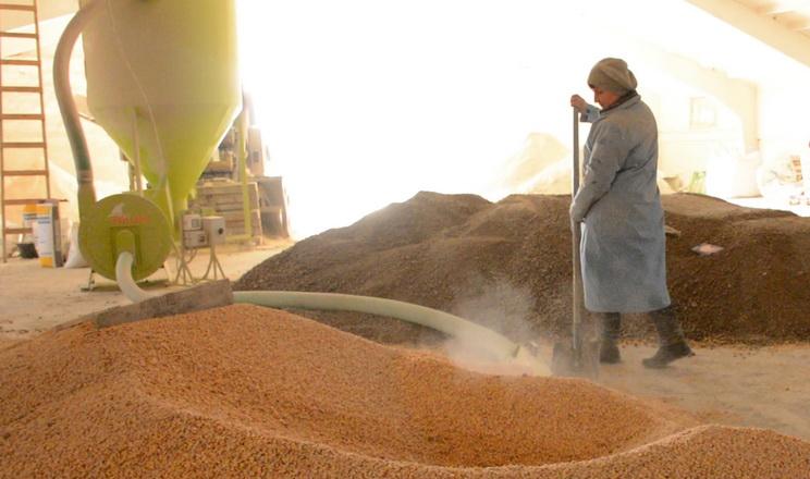 Баришівська зернова компанія запустила нову комбікормову лінію