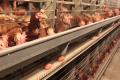 Що впливає на якість яєць