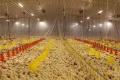 LED-лампи допомагають заощаджувати на освітленні пташника