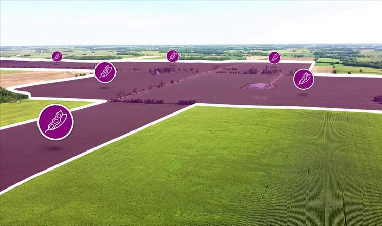 BASF додав нові функції xarvio Field Manager для українських аграріїв
