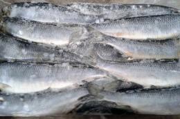 У січні Україна на 98% скоротила імпорт мороженої риби