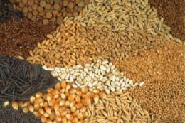 Під час карантину важливо зберегти логістичні потоки для забезпечення аграріїв насінням, - думка