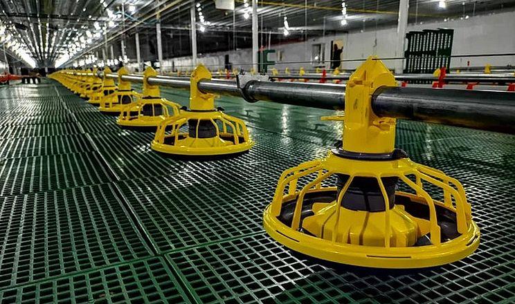 Вирощування бройлерів на пластиковій підлозі покращує виробничі показники