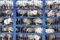 Комплекс із утилізації тваринних відходів побудують у Дніпрі