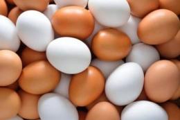 Експорт яєць за січень-лютий просів на 20,5%