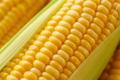 Регламенти застосування хімпрепаратів на солодкій кукурудзі відрізняються від таких для кукурудзи на зерно