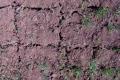 Критичний рівень вологи в ґрунті: експерт назвав спосіб порятунку посівів