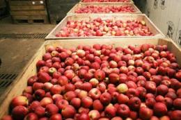Китай затоварився яблуками