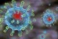 ФАО розробила принципи біозахисту підприємств і господарств в умовах жорсткого карантину