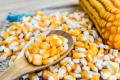 Досліджено вплив регуляторів росту на вміст фосфору у кукурудзі