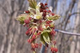 Збирання квіткового пилку може стати додатковим джерелом доходу для пасіки