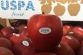 Українське яблуко сорту Фуджі підкорило азійські ринки