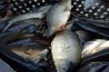 Експорт живої риби за три квартали зріс на 31%
