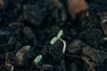 Рекомендовані рівні ґрунтових вод для різних типів ґрунтів на Поліссі
