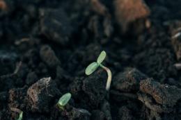 Вміст гумусу на полях ФГ «Слобідське» зріс за десять років застосування технології no-till