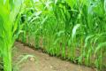 Компанія HarvEst планує використати міські стічні води для зрошення полів