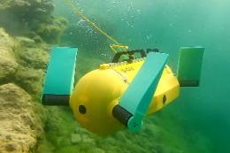 Робота-черепаху хочуть працевлаштувати інспектором на рибоферму