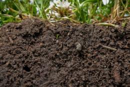 Як оптимізувати вміст гумусу у ґрунті