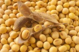 Урожайність сої в ПП «Західний Буг» цього року майже на 30% перевищує середню по Україні
