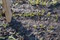 Перезволоження ґрунту ускладнило посівну на Харківщині