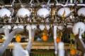 У 2020 році виробництво рідких яєчних продуктів у «Овостар Юніон» скоротилося на 3%