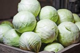 Фермер розповів як вирощує капусту з невеликими головками