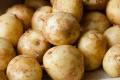 Через перевиробництво молодої картоплі її можуть залишати на полях, – експертка