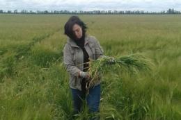 На Запоріжжі обстежують посіви ячменю, який планують експортувати до Китаю
