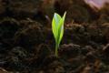 Як отримати стабільні врожаї в умовах кліматичних змін