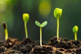 Як забезпечити здорову мікрофлору ґрунту