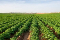 У Львівській області випускатимуть біоупакову з картопляного крохмалю